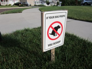 If you dog poops-you scoop