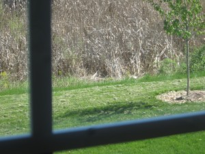 I can't concentrate on writing, the grass needs to be raked.