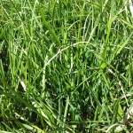 What is the most important quality to have in a business? Or why I hired Toolan Landscaping to mow my lawn.